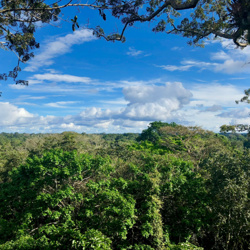 View from the lookout tower, Tiputini Biodiversity Station